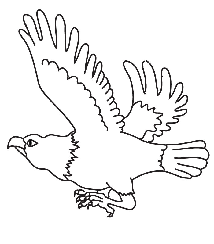 Coloring Eagle Eagles Coloring Page