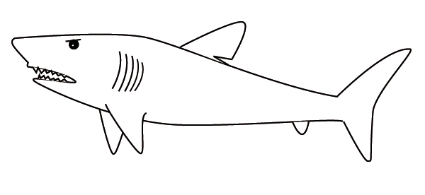coloring shark