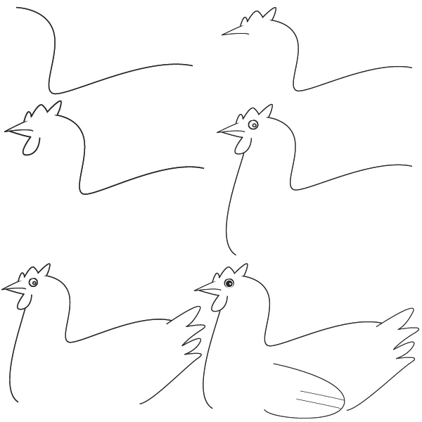 how to draw a chicken step by step photo3