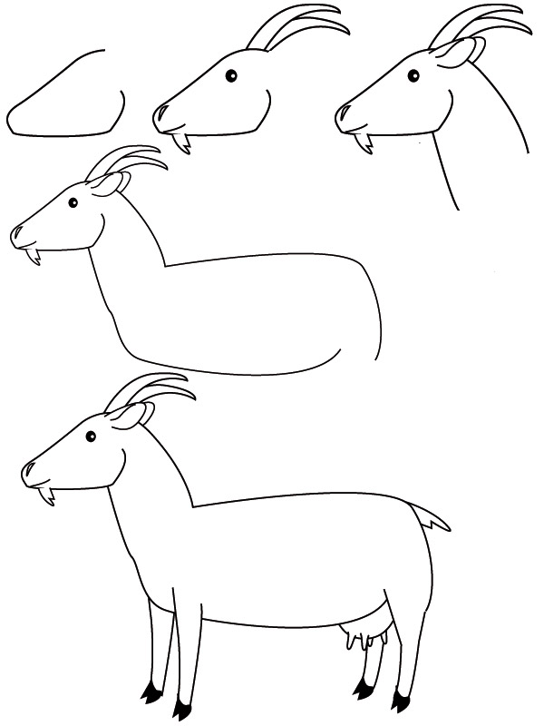 drawing goat