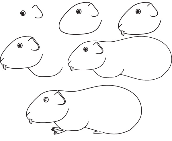 guinea pig coloring picture free coloring pages