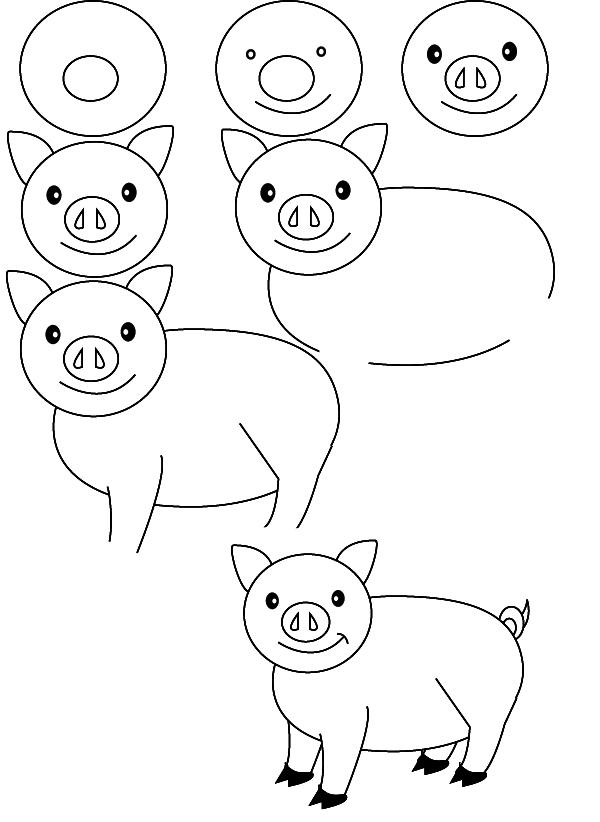 drawing pig