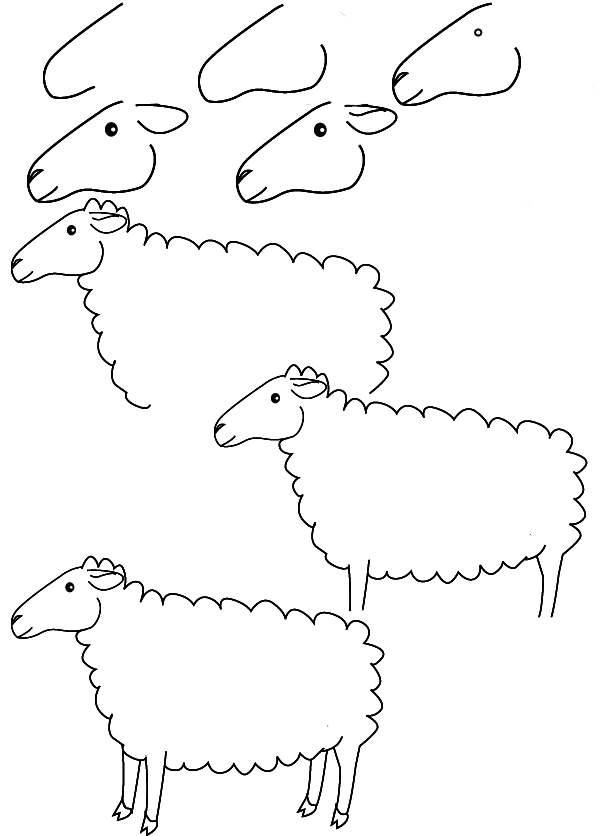 How to draw a sheep - photo#5