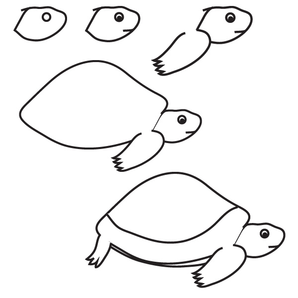 How To Draw A Sea Turtle Step By Step For Kids on from a pig cuts of meat