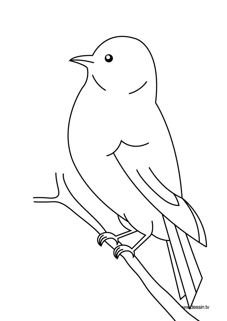 coloring bird