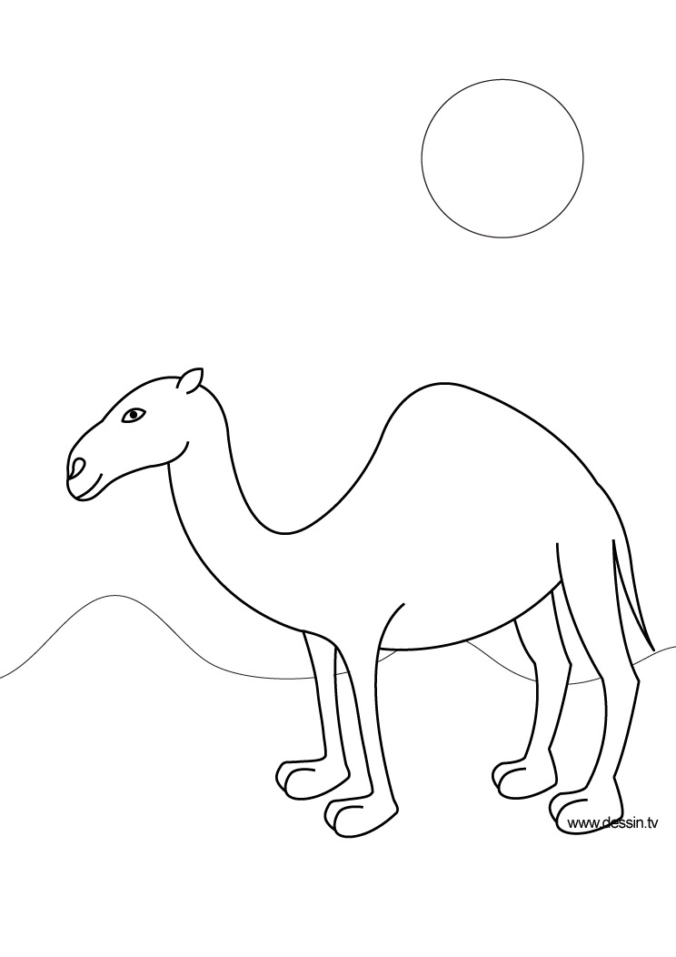 coloring camel