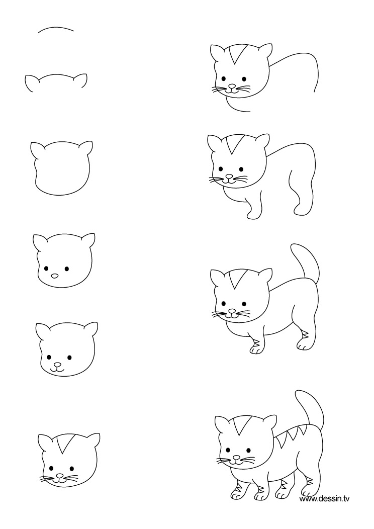 drawing kitten