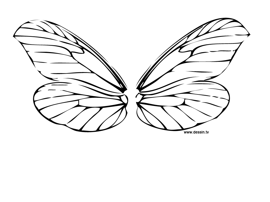 coloring dragonfly wings - Drawing Pictures For Colouring