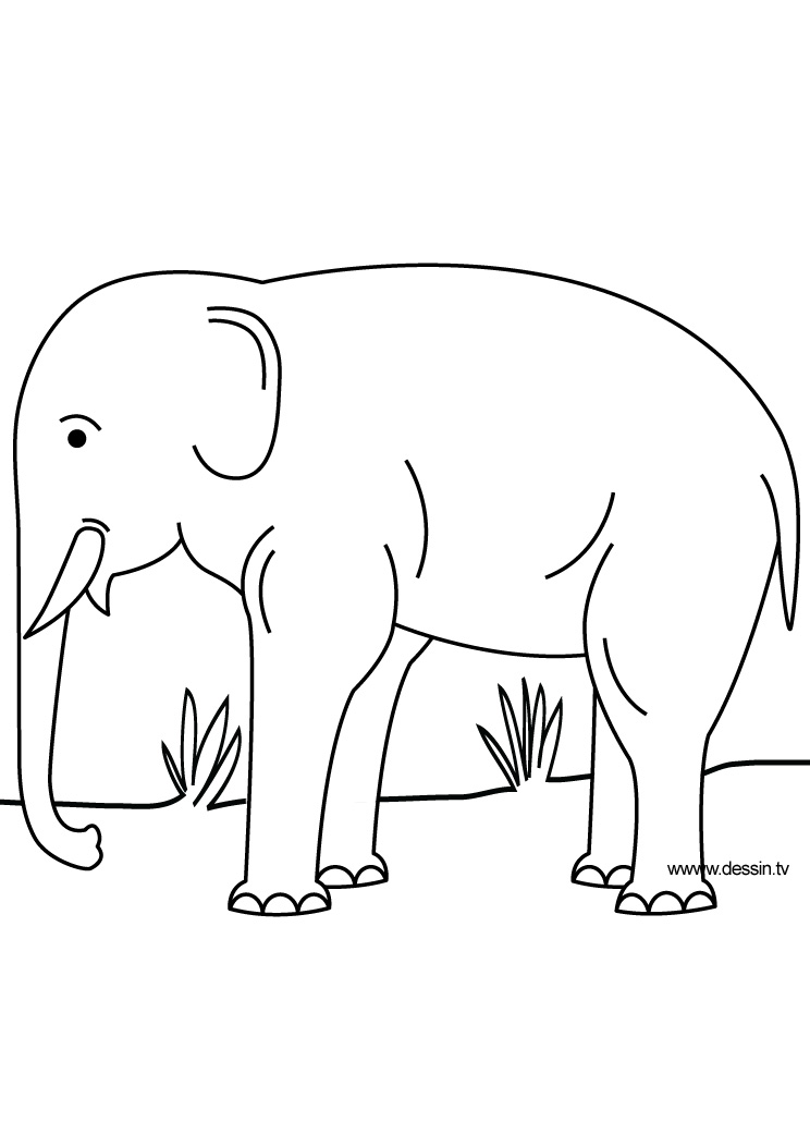 free coloring pages of elephant hard
