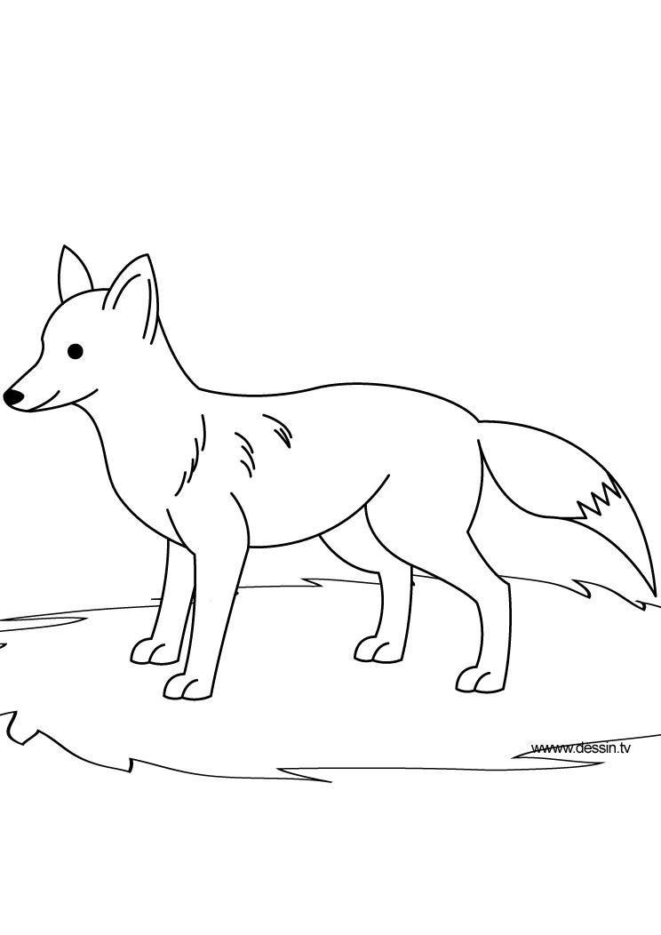 coloring fox