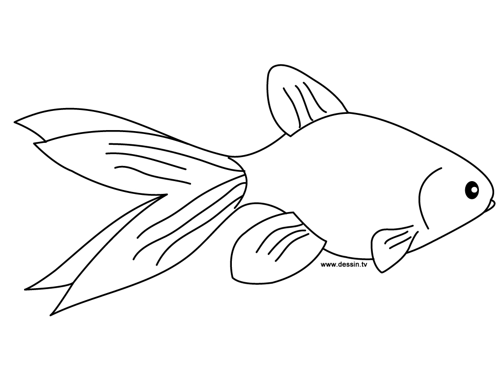 coloring goldfish