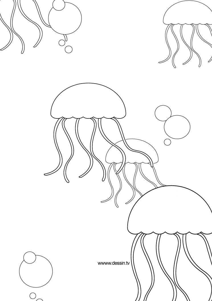 Simple Jellyfish Coloring Pages Jellyfish Coloring Page
