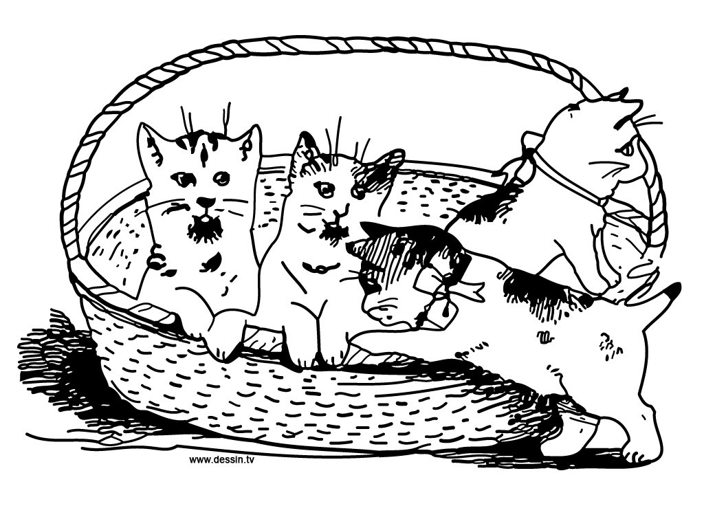 Free Coloring Pages Of To Draw Kittens