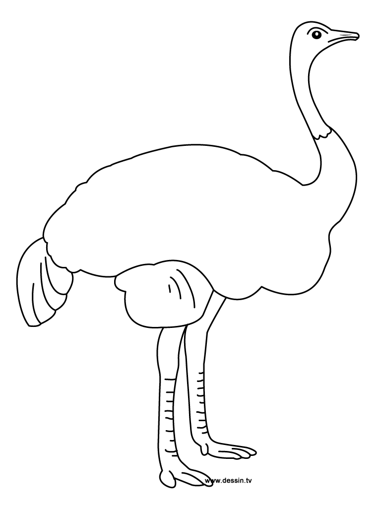 coloring ostrich-2