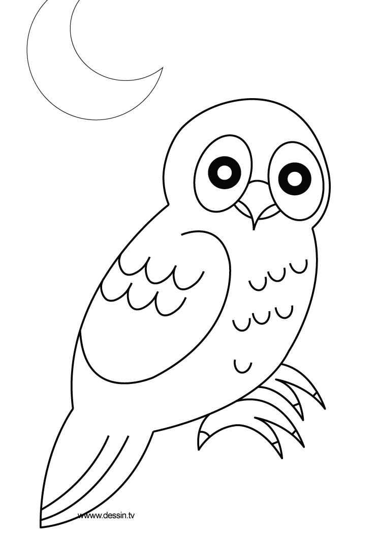 Free How To Draw A Owl Coloring Pages Coloring Page Of Owl