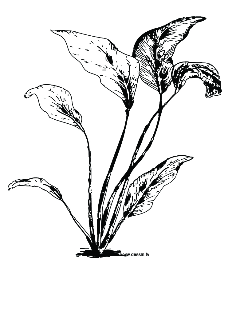 coloring pages seeds and plants - photo #37