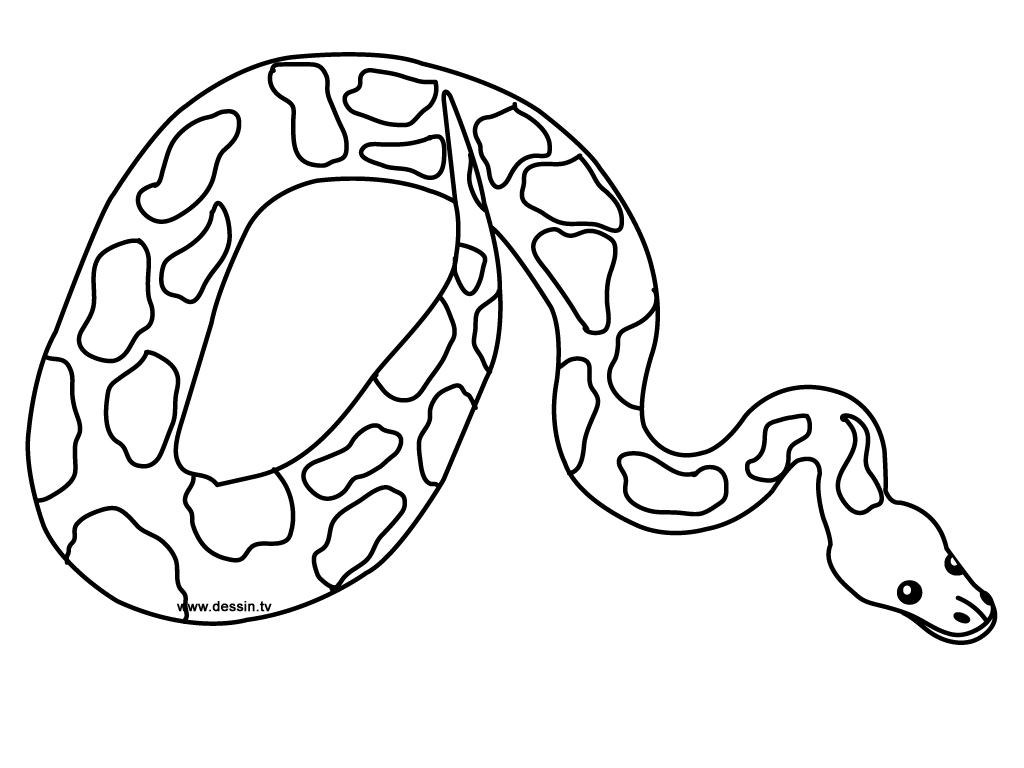 Snake Coloring Pages Glamorous Coloring Python Snake Inspiration Design