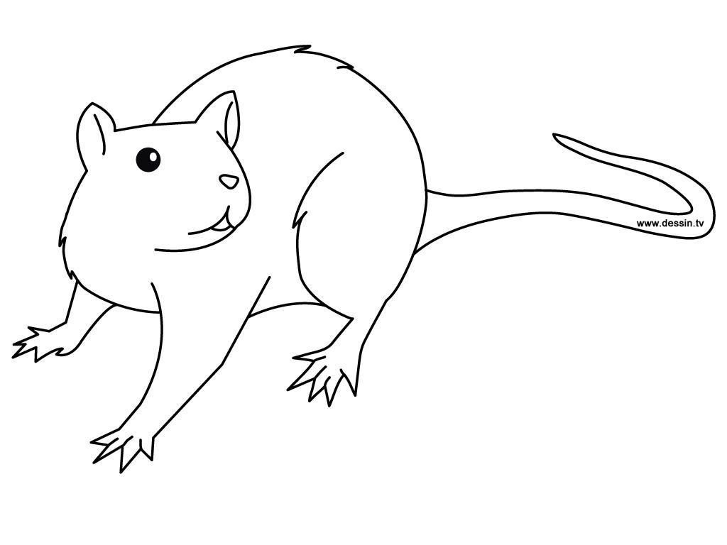 coloring rat
