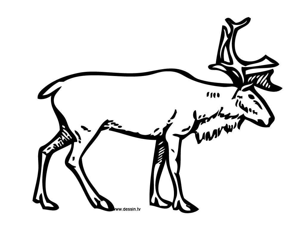 Realistic Reindeer Coloring Page Realistic Christmas Re...