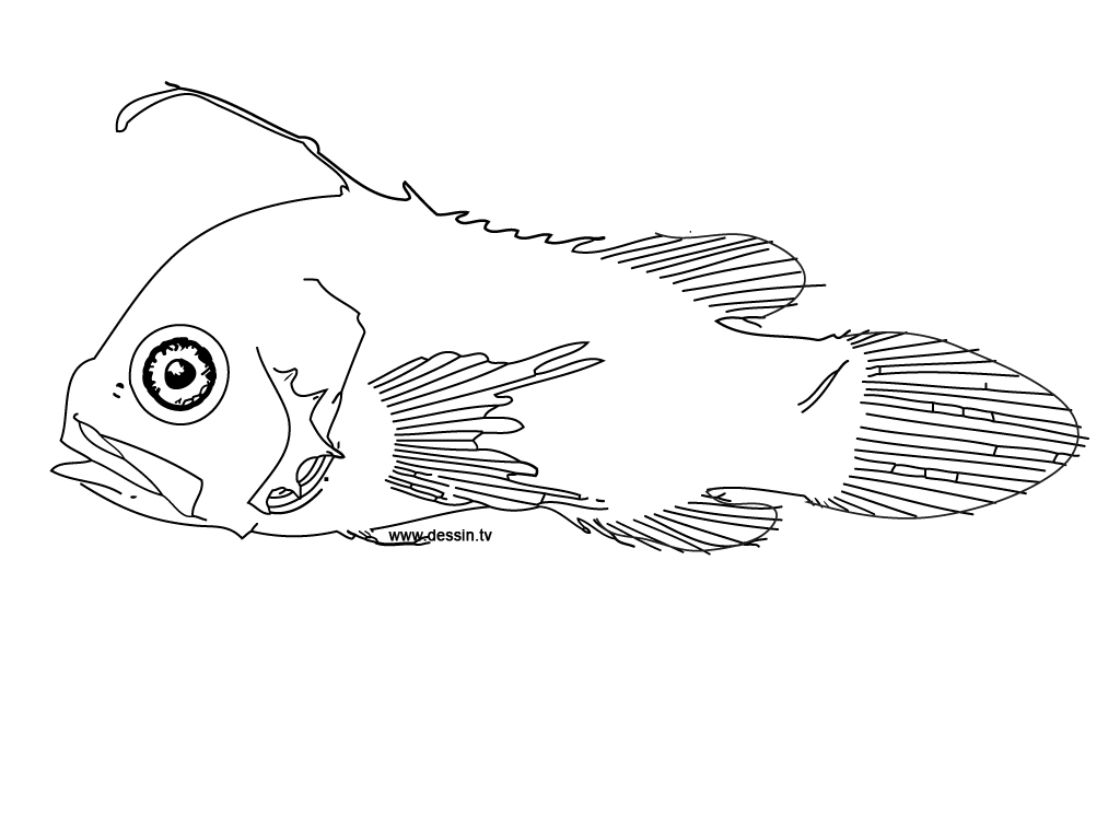 tackle box coloring pages - photo #18