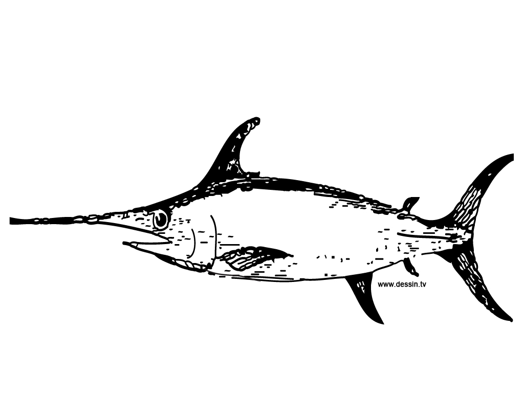 Uncategorized Swordfish Drawing coloring swordfish swordfish