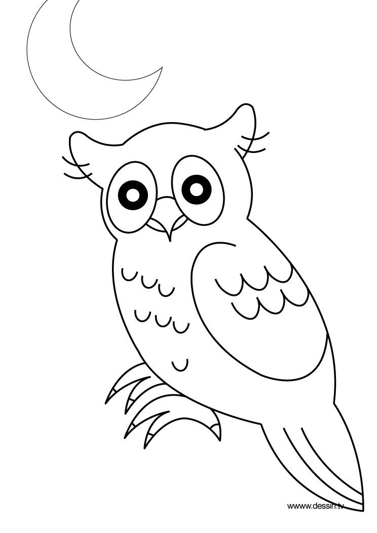coloring true-owl