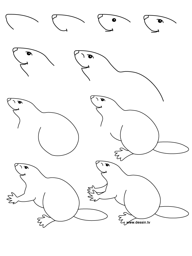 drawing beaver