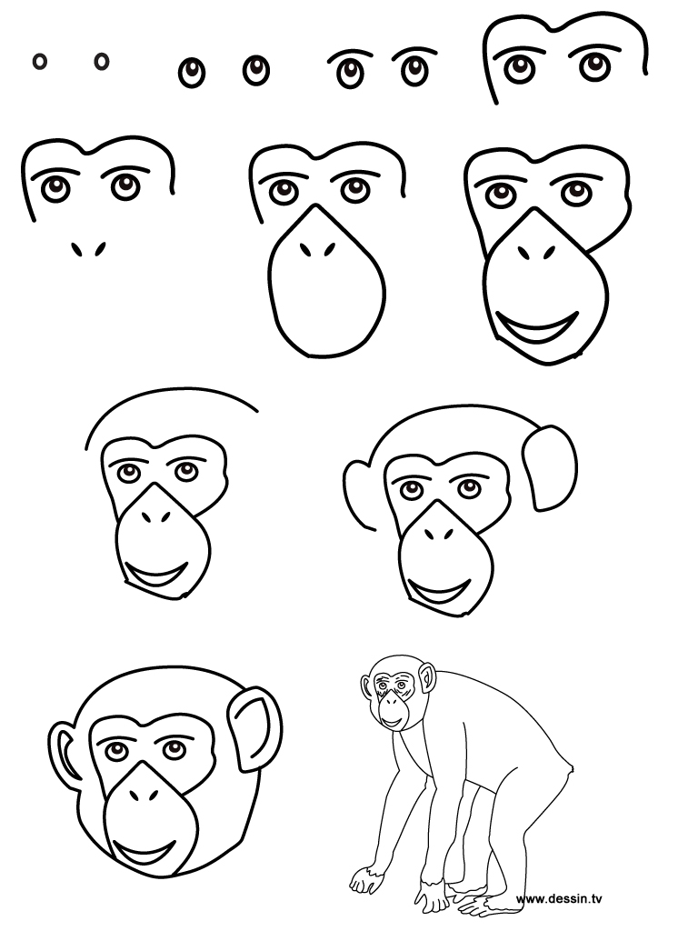 drawing chimpanzee