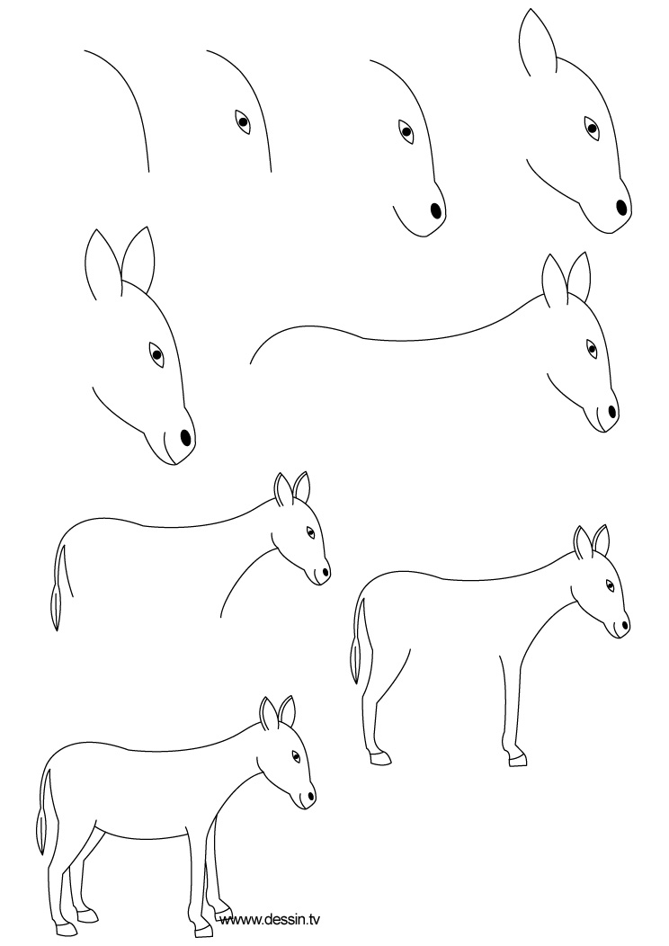 drawing donkey