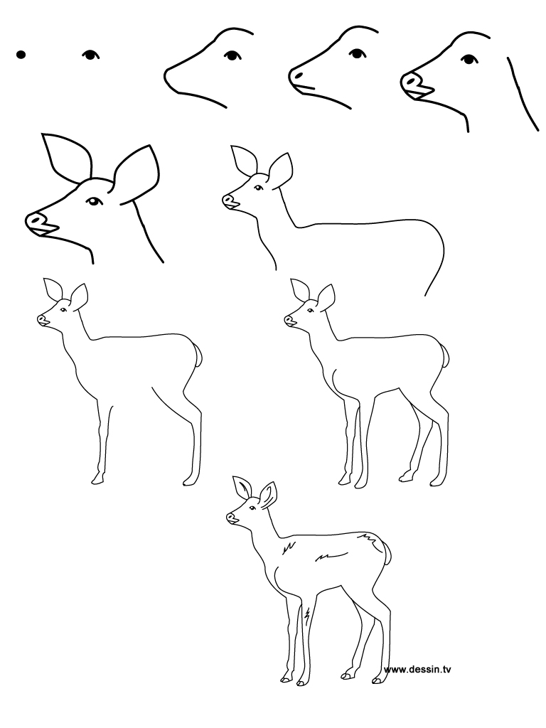 easy animals to draw step by step MEMEs
