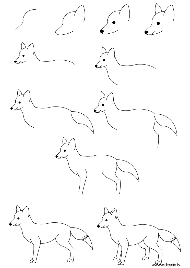 How to draw a fox - photo#1