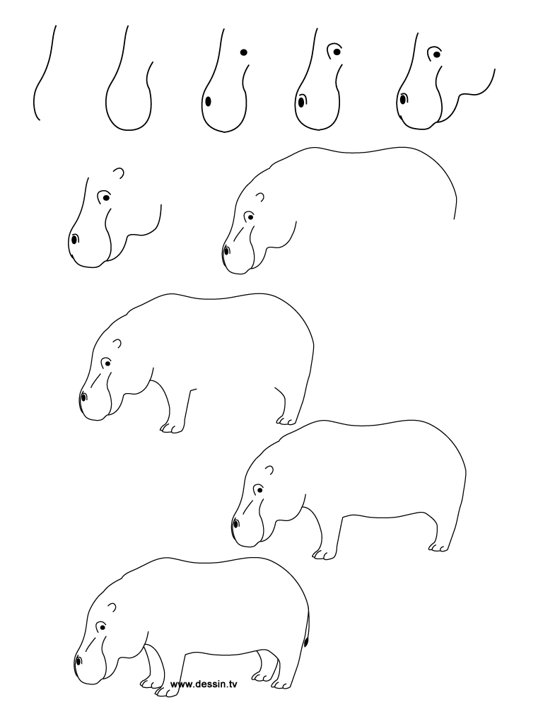 drawing hippo
