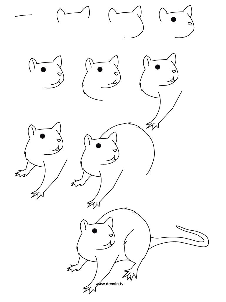 drawing rat