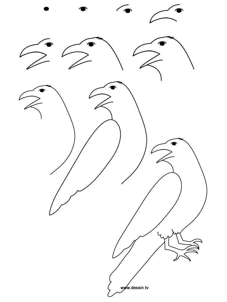 drawing raven