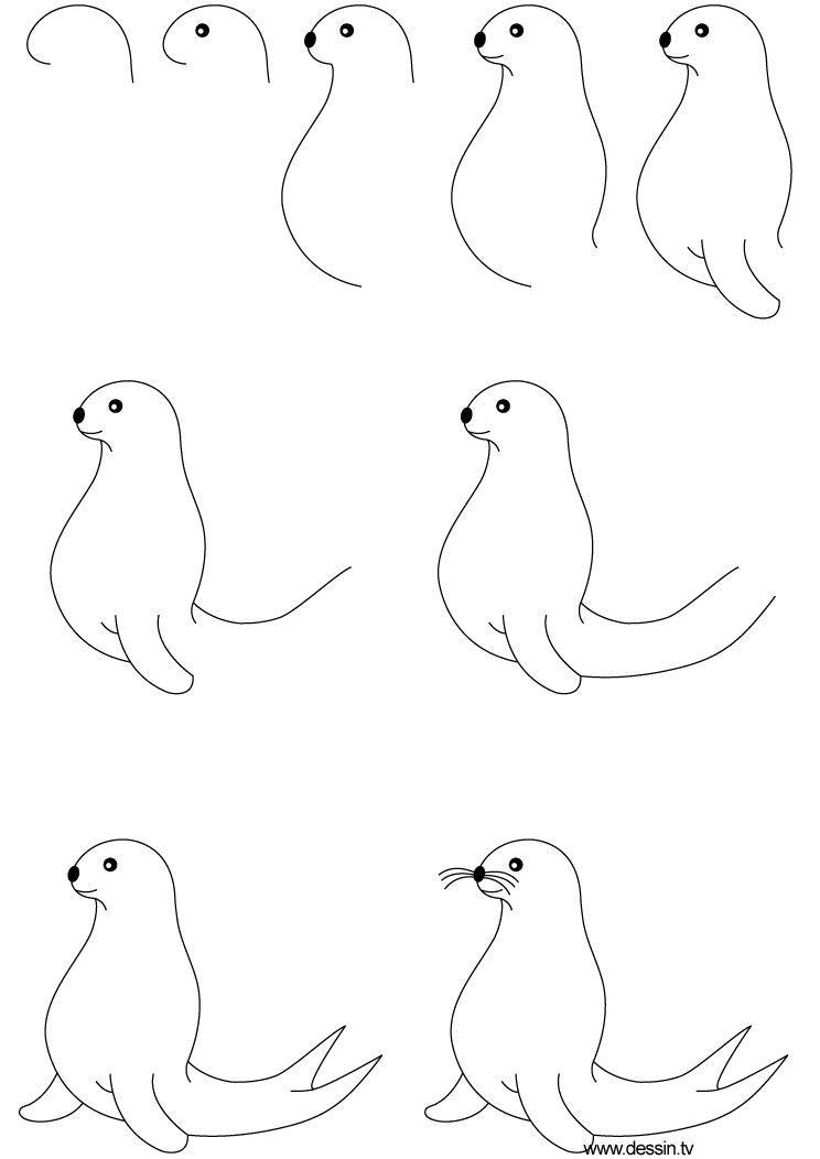 how to draw a seal with simple step by step instructions