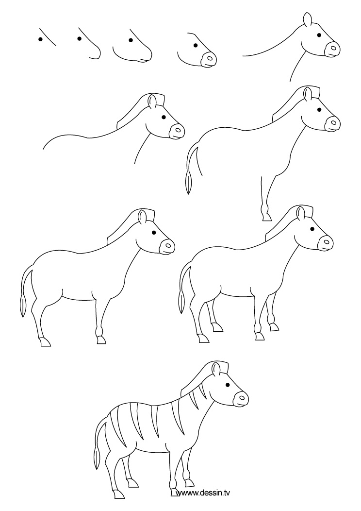 drawing zebra
