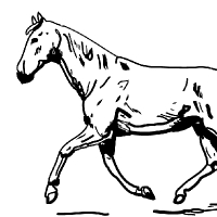 Coloring trotting horse