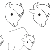 Drawing bison