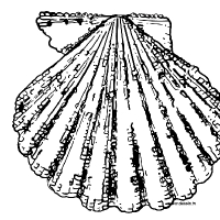 Coloring scallop