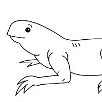 Coloring iguana
